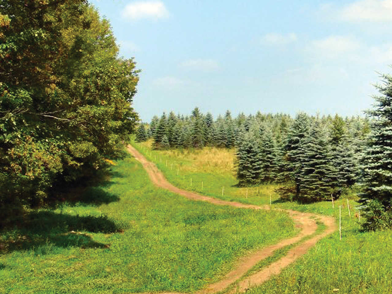 ride area review tall pines atv park atv illustrated