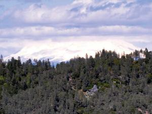 location.2012.california-chappie-shasta.trees.jpg