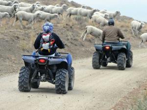 location.2013.elko-county.nevada.atvs-on-trail.sheep-crossing.JPG