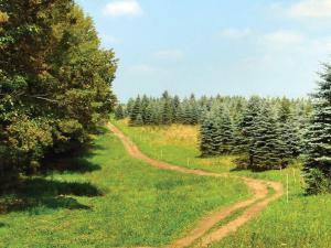 location.2014.tall-pines-atv-park.trail_.JPG