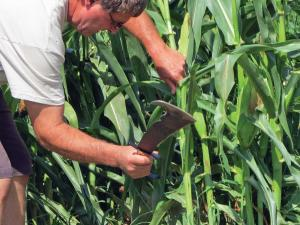 vendor.2015.woodmans-pal.knife.cutting-corn.jpg